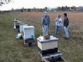 Beehives for meeting workshops